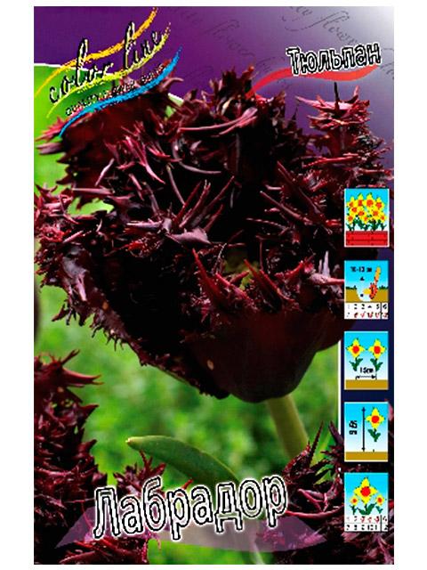 Тюльпан Лабрадор (бахромчатый), 10 штук