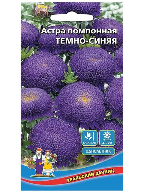 Астра Помпонная Темно-Синяя ц/п, Уральский дачник