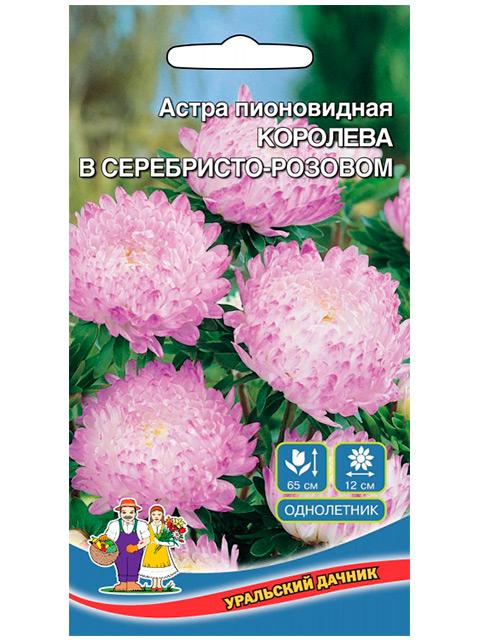 Астра Королева гигантов в серебристо- розовом, пионовидная ц/п Уральский дачник