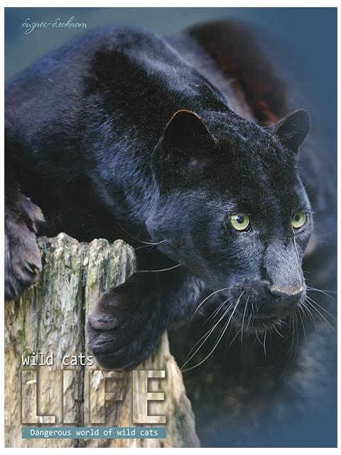 """Бизнес-блокнот А5 80 листов Profit """"Черная пантера"""" твердая обложка"""