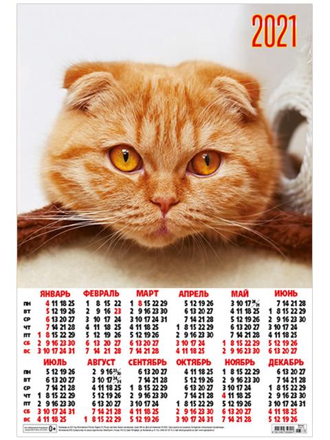 Календарь листовой А3 на 2021 Кошки. Рыжий котик