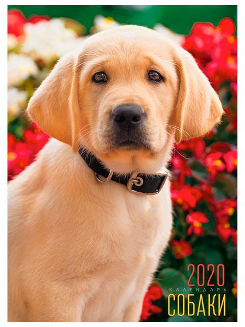 """Календарь 2020г. настенный перекидной """"Listoff. Домашние любимцы. Милый щенок"""" на евроспирали"""