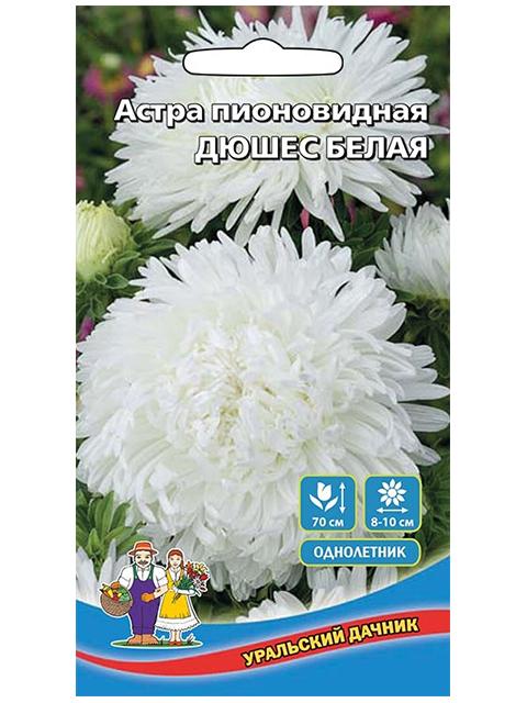 Астра Дюшес Белая, пионовидная, ц/п, Уральский дачник