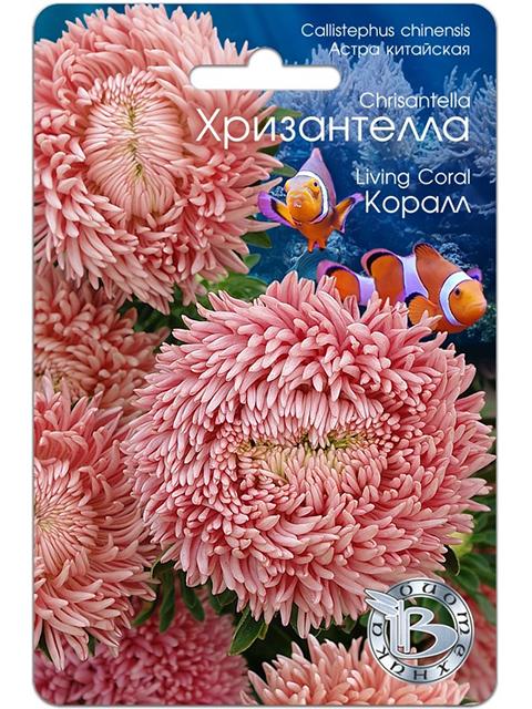 Астра китайская Хризантелла, Коралл, 40шт, ц/п