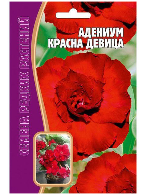 Адениум Красная девица, 3шт, ц/п