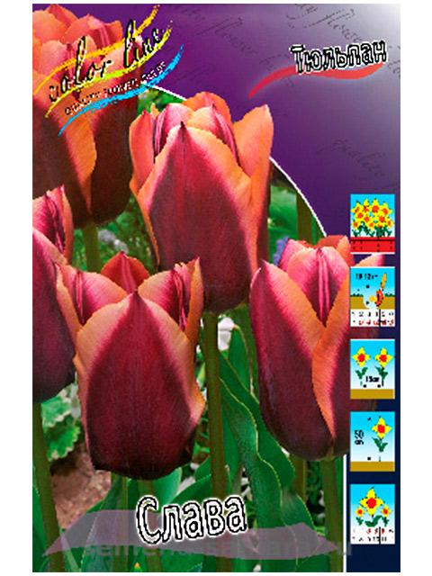 Тюльпан Слава (триумф), 8 штук