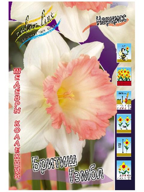 Нарцисс Бритиш Гэмбл (сплит, роз) /(5 штук)