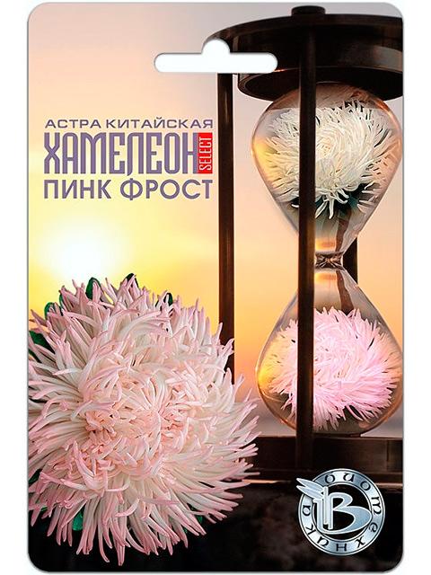 Астра Хамелеон Пинк Фрост, китайская, 40 штук. ц/п