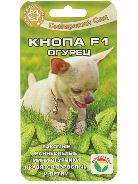 Огурец Кнопа F1, 7 штук, цв/п Сибсад