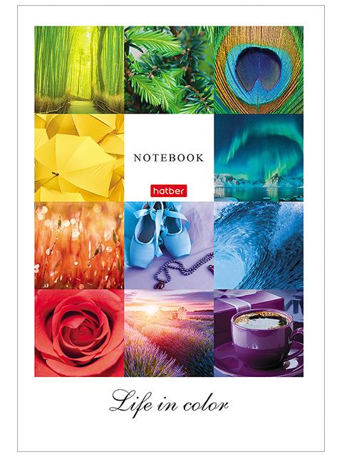 "Бизнес-блокнот А5 96 листов клетка/линия Хатбер ""Жизнь в цвете"" обл. 7БЦ"