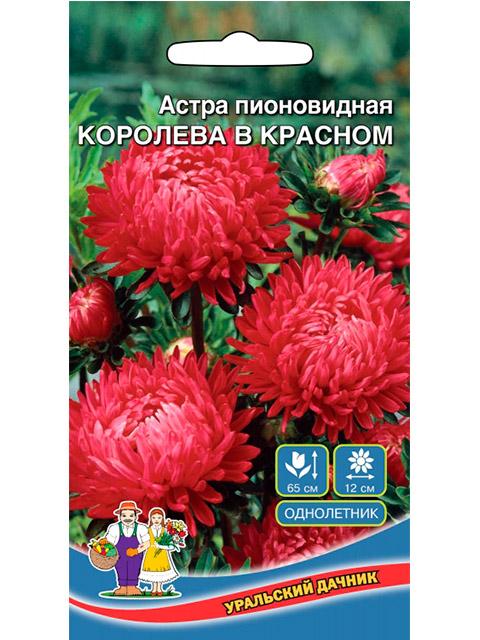 Астра Королева в красном, пионовидная ц/п, 0,25г сер. Уральская усадьба