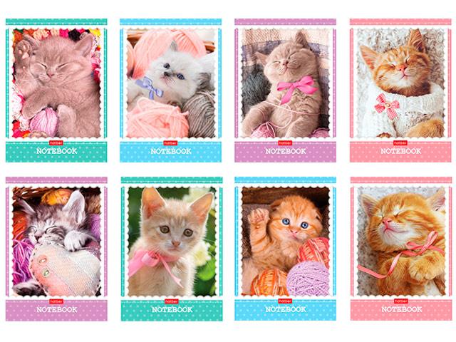 """Блокнот А6 48 листов Хатбер """"Котиков много не бывает"""" на скрепке"""