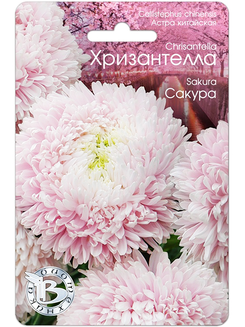 Астра китайская Хризантелла, Сакура, 40шт, ц/п