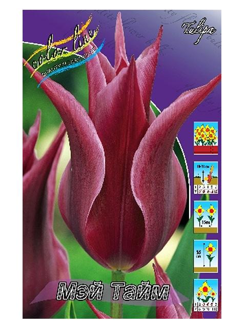 Тюльпан Мэй Тайм (лилиецветные), 10 штук