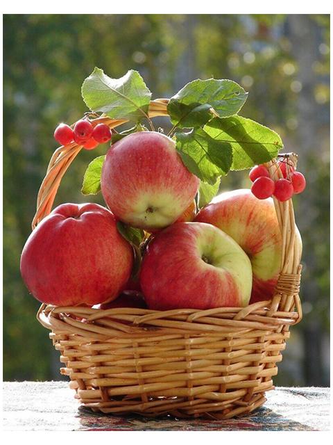 """Картина по номерам Colibri """"Яблоки в корзине"""" 40*50см"""