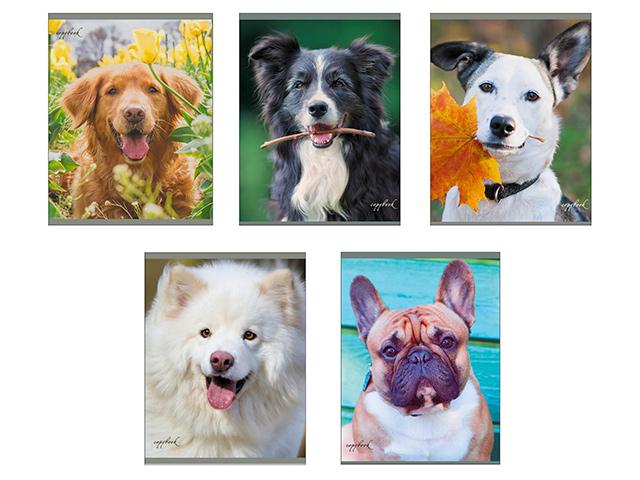 """Тетрадь А5 96 листов клетка Unnika """"Любимая собака"""" обложка мелованный картон, скрепка"""