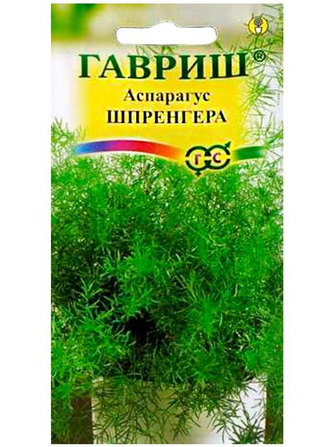 Аспарагус Шпренгера, ц/п, 5 штук