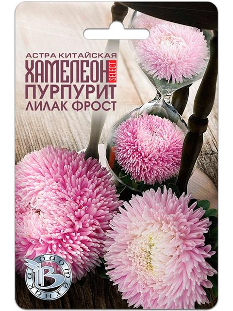 Астра Хамелеон Пурпурит Лилак Фрост, китайская, 40 штук. ц/п