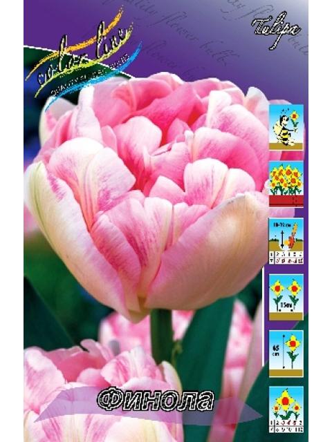 Тюльпан Финола (махровый поздний), 8 штук