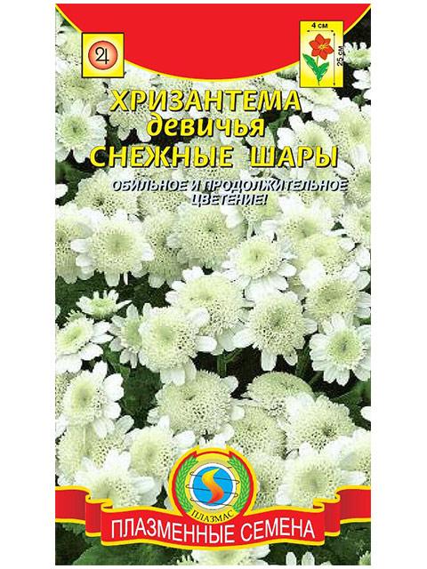 Хризантема девичья Снежные шары, ц/п, Плазмас