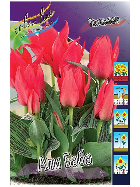 Тюльпан Али Баба (грейга) (10шт)