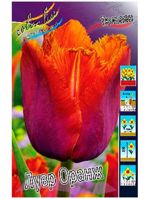 Тюльпан Лувр Оранж (бахромчатый), 10 штук