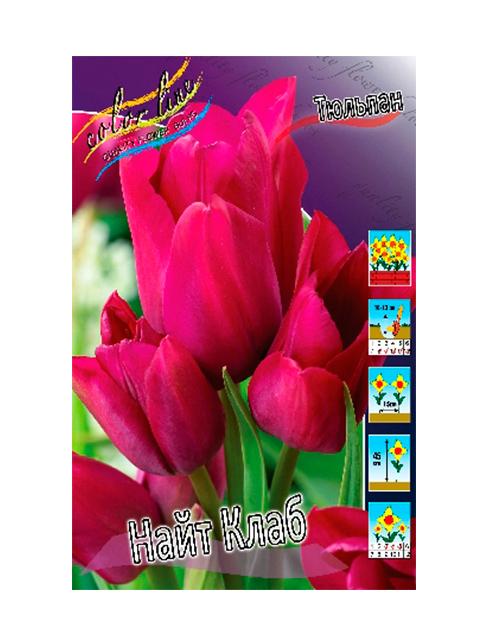 Тюльпан Найт Клаб (многоцветковый), 8 штук