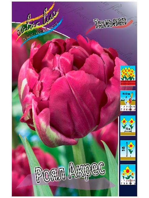 Тюльпан Роял Акрес (махровый ранний), 10 штук